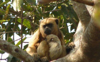 Visite de la forêt aux singes