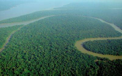 Nuit de «survie» en forêt Amazonienne