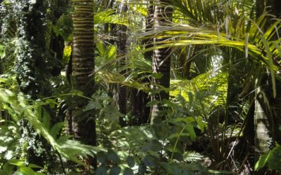 """Trek"" dans la jungle"