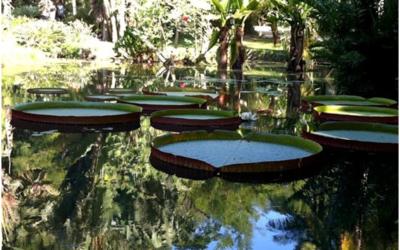 Visite en jeep de la forêt de Tijuca et du jardin botanique